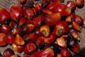 savon à froid à l'huile de palmiste